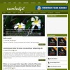 Cambodja wordpress theme