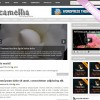 Camellia wordpress theme