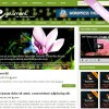 Cyclamen wordpress theme