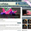 Fuchsia wordpress theme